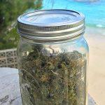 Bermuda Making Moves, Medical Cannabis Legislation Tabled In Senate