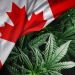 The Brits Say Canada's Cannabis Policies A Success!