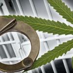 The unintended consequences of marijuana decriminalization