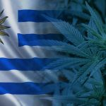 New Uruguayan decree could position country as cannabis logistics hub