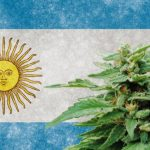 Argentina inches closer to first locally made cannabis medicine