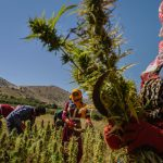 Lebanon - The First (And Last?) Arabic Country to Legalize Medicinal Marijuana