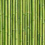 Big Boost From Jamaican Bamboo